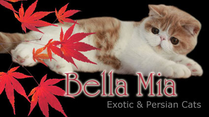 Bella Mia Exotics